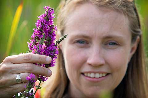 Photo of professor displaying purple loosestrife