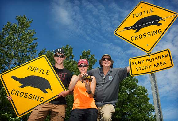 From left, SUNY Potsdam senior Gyle Dominy '18, alumna Jennifer Flickinger '17 and Professor Glenn Johnson pose with turtle crossing signs and a threatened Blanding's turtle on Swamp Rd. in Lisbon.