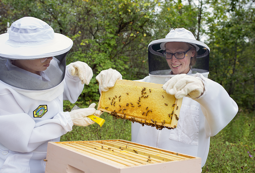 inspecting local bee hives