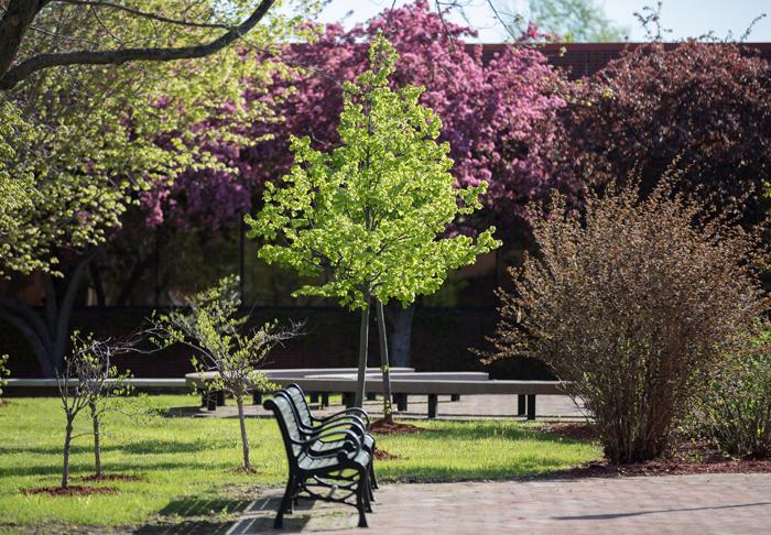Spring Campus Photo